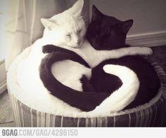 So much Love...