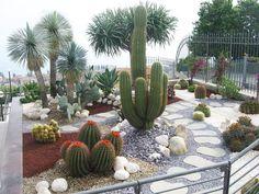 #cactusgarden #succulentgarden #garden #باغ #باغ #کاکتوس_باغ #ساکولنت_باغ #باغ_کاکتوس #باغ_ساکولنت # #cactus #cacti #cacto #kaktus #кактус #サボテン #仙人掌 #선인장 #kaktüs #cactos #Cactaceae #kakteen #کاکتوس #صبار #ساکولنت #succulent #succulents #suculenta #suculentas #sukulent