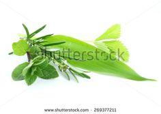 Természet Stock fényképek : Shutterstock Stock fényképészet