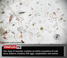 Fact of the day: a single drop of seawater magnified 25 times