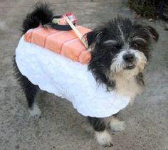 Sushi Dog Costume!