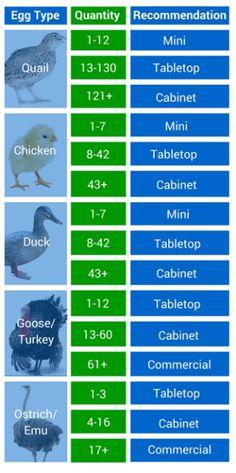 Incubator Analysis Chart - by Emily Baker