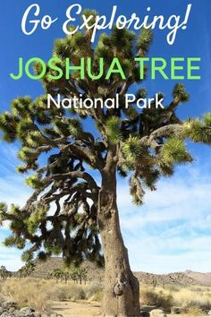 Joshua Tree National Park is a 45 minute drive from Palm Springs - go exploring at Joshua Tree National Park for hiking, camping, rock climbing, nature walks, picnics, and more! SoloTripsAndTips.com