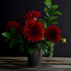 Petal by Petal:: The Dahlia