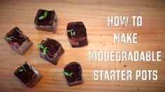 How To Make Biodegradable Plant Pots - Homemade Seed Starting Pots... - http://www.ecosnippets.com/gardening/make-biodegradable-seed-starting-pots/