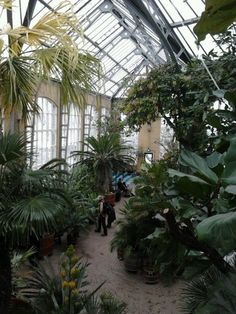 Inspirational Hortus Botanicus Amsterdam on pinterest Buscar con Google