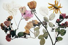 More dried flowers, keep flat in a book and then paste them to a white or painted canvas. Beautiful wall art!