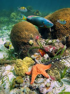 Hard coral with colorful tropical fish and a starfish , Under The Water, Life Under The Sea, Underwater Animals, Underwater Life, Colorful Fish, Tropical Fish, Flora Marina, Beautiful Sea Creatures, Sea Plants