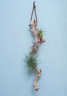 大きな流木に取り付けると、とってもアートなオブジェになりますね~!!