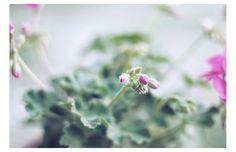 lililemieux photography (7)