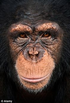 U.S. court grants 'human rights' to chimpanzees.