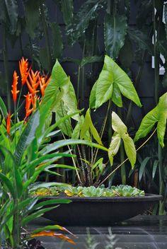 Mark Vowles Garden | Cairns
