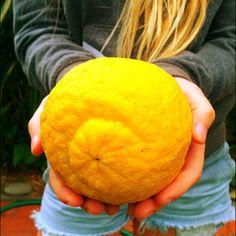 Giant lemon!