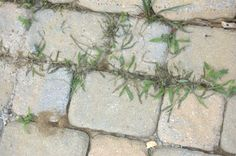 Ways to Kill the Crack Weeds