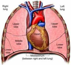 a description of the heart and its four cavities Patients can usually go home when their temperature returns to normal and  symptoms  endocarditis is an inflammation that affects the heart.