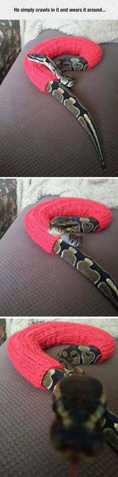 Happy Snek is Happy. --I don't think there has ever been a cuter snake. That's it, internet. We can all go home