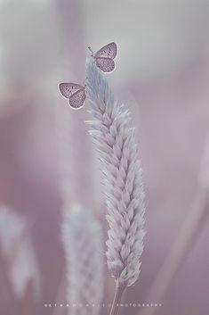a Fairy by Etha Ngabito on 500px