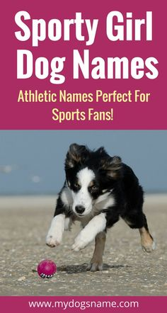 If you're a sports fan, these sporty dog names are perfect for your new pup. Puppies Names Female, Female Dog Names, Puppy Names, Pet Names, Border Collie Names, Border Collies, Pets, Pet Dogs, Gn