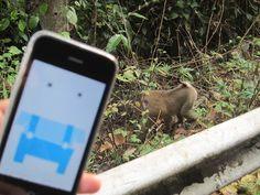 Meet the choco monkey!  Khao Yai National Park / Thailand
