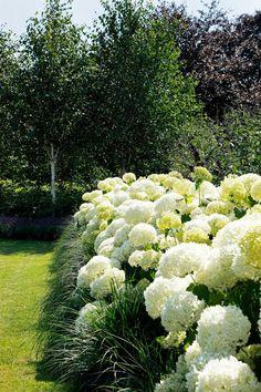 Hortensia & # s - Hydrangea Garden, Garden Shrubs, Garden Fencing, Hydrangeas, Backyard Pool Landscaping, Front Yard Landscaping, Hydrangea Annabelle, Scandinavian Garden, Garden Animals