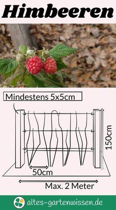 Leckere Naschfrucht im Hausgarten