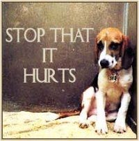 Stop Selling Shelter Animals for Experiments in Michigan - please sign the petition on change.org. If animals could speak would you listen?
