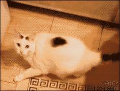 Cats are liquid