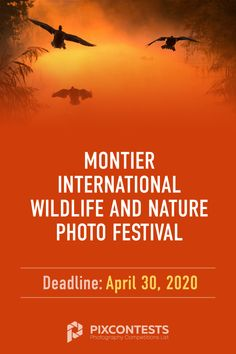 images?q=tbn:ANd9GcQh_l3eQ5xwiPy07kGEXjmjgmBKBRB7H2mRxCGhv1tFWg5c_mWT Collection of Top Nature Photography Contests 2020 Resources Now @capturingmomentsphotography.net