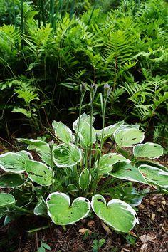 Park Seleger Moor, czyli czy warto zapłacić za kontakt z naturą? Switzerland, Flora, Herbs, Park, Plants, Photography, Photograph, Fotografie, Herb