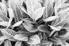 leaf Photography Words, Leaves, Throw Pillows, Egg, Ideas, Cushions, Decorative Pillows, Decor Pillows
