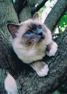 """""""Cats, too, with what silent stealthiness, with what light steps do they creep up to a bird."""" --Pliny the Elder"""