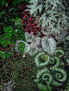 Shade Garden, Garden Plants, House Plants, Begonia, Tropical Garden, Tropical Plants, Beautiful Gardens, Beautiful Flowers, Plants Are Friends