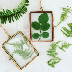 Framing these leaves from my garden  Ornaments? Gifts? Window art? Time will tell! @TheJungalow #JungalowStyle
