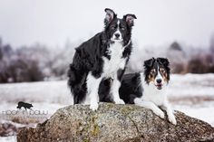 Brothers by bond.  Captured a photo of my Balan and Bron, together, yesterday :)