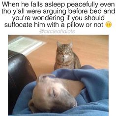Today we have brought freshly curated funny animal pictures with captions. This is one of the best animal pictures collection. Besides, we have few funny animal memes for you. Memes Ridículos, Silly Memes, Funny Animal Memes, Dog Memes, Funny Dogs, Funny Animals, Jokes, Meme Gifs, Funniest Animals