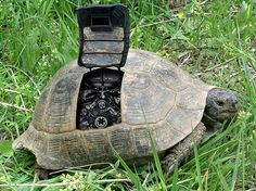 STORY STARTER: When I spotted__________wandering through my backyard, I realized he was no ordinary turtle. **Common Core State Standards: (uses clauses/transitions/commas, writes routinely within time frames, uses adequate volume) Kindergarten Writing Prompts, Writing Prompts Romance, Writing Pictures, Writing Prompts For Writers, Picture Writing Prompts, Creative Writing Prompts, Teaching Writing, Writing Activities, In Kindergarten