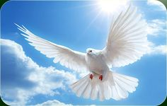 veel pluimen sterke vleugels - Google zoeken