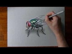 Another great video of Marcello painting a fly.