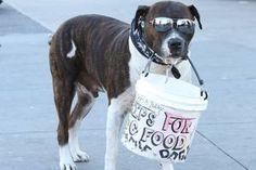 "bones! Life's ""ruff"" for a panhandling Bronx pooch named Bobby ..."