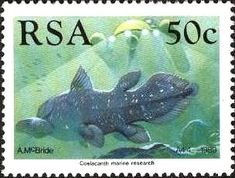 West Indian Ocean coelacanth (Latimeria chalumnae), Submarin