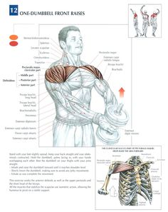 Single Dumbbell Front Raises another good idea to help mobility! Sport Fitness, Muscle Fitness, Mens Fitness, Muscle Food, Chest Workouts, Gym Workouts, Fitness Exercises, Bed Workout, Fitness Hacks