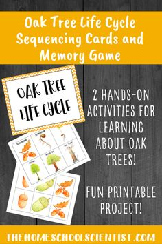 Oak Tree Life Cycle Lesson and Memory Game - The Homeschool Scientist Autumn Activities For Kids, Kids Learning Activities, Hands On Activities, Learning Time, Project Based Learning, Tree Life Cycle, Homeschool Coop, Nature Journal, Nature Study