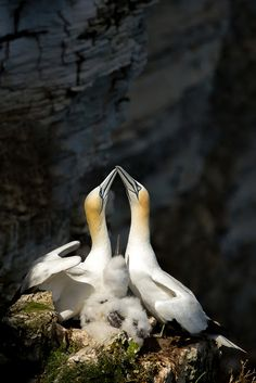 Wildlife Photography - Community - Google+