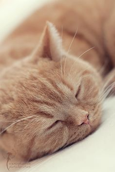 """""""You cannot look at a sleeping cat and feel tense."""" --Jane Pauley"""