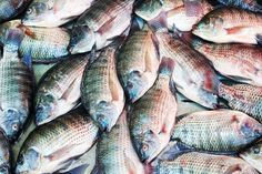 How farmed Tilapia is a More Unhealthy Food Than Bacon | Eat This Not That (and farmed fish in general) ... low in Omega 3, high in Omega 6, often toxic.