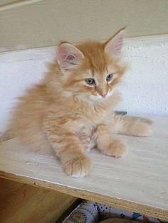#Cats  #Cat  #Kittens  #Kitten  #Kitty  #Pets  #Pet  #Meow  #Moe  #CuteCats  #CuteCat #CuteKittens #CuteKitten #MeowMoe      Cute cats Photo   http://www.meowmoe.com/12353/