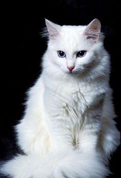 Cutest cats