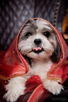 Too freakin' cute! A dog at an Asian wedding via Rubies & Ribbon