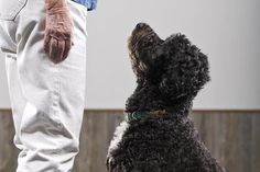"""The command """"look"""" is used to get your dog's attention. It is useful for times when you need your dog to focus on you, such as during obedience training."""