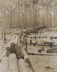 Lumber trade. Nacogdoches, Texas. 1899.